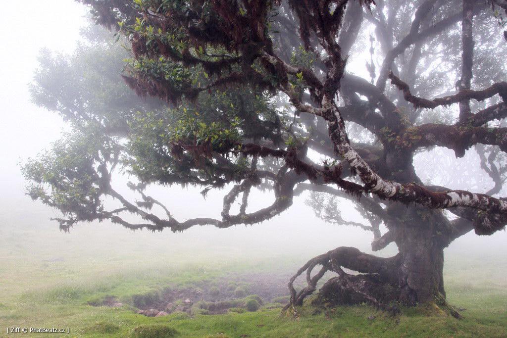 1407_Madeira_105