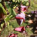 201211_CUBA_004